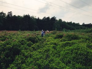 Menschen inmitten der Kalmiapflanzen auf einer dicht bewachsenen Freifläche